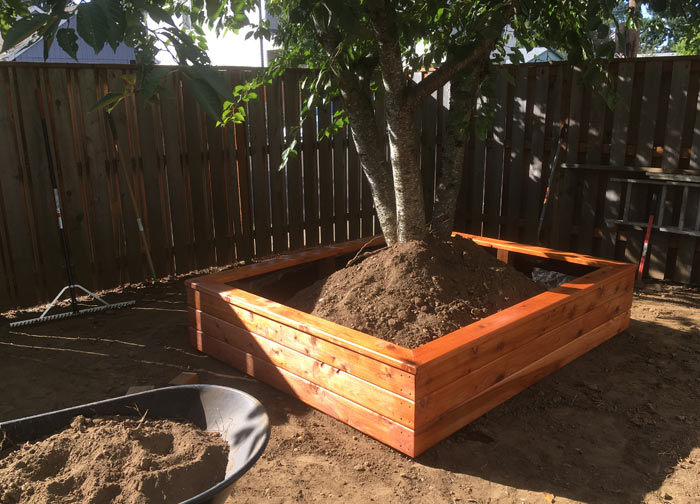 large tree planter box